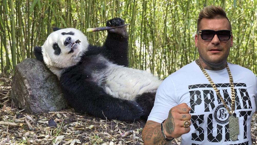 Popek reanimuje umierającą pandę! Mamy WIDEO