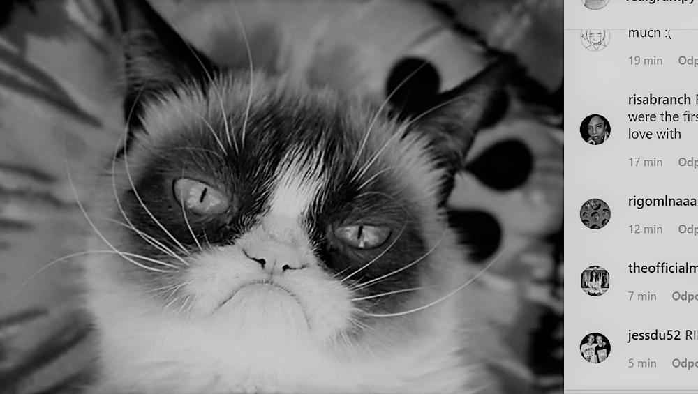 Grumpy Cat nie żyje. Sławna kotka miała 7 lat