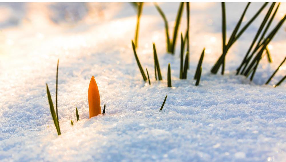 Pogoda na weekend: wiosna?! Nawet +10, ale czy 'bestia ze wschodu' na pewno odeszła?