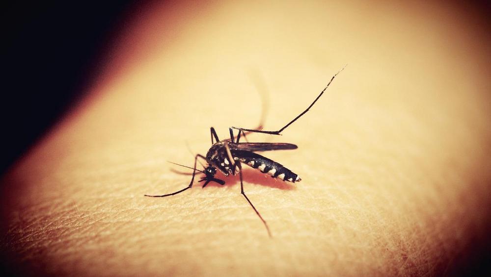 Piosenki odstraszające komary? Apteka stworzyła playlistę