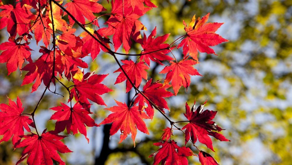 Pogoda nas zaskoczy: ponad 20 stopni w październiku!