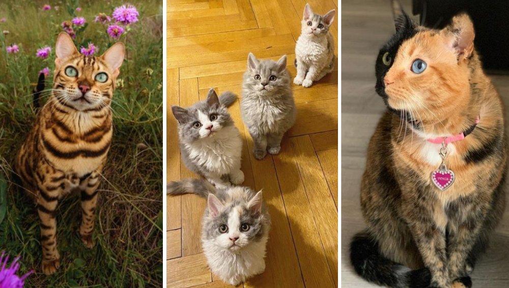 Instagram: te koty mają tysiące followersów. Musicie je poznać
