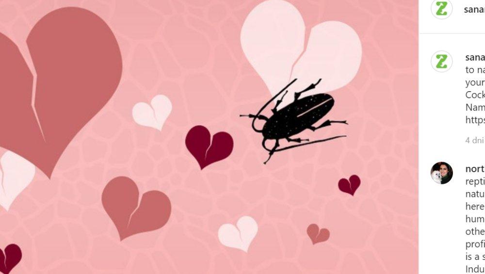 Walentynki 2020: nazwij karalucha imieniem byłego!