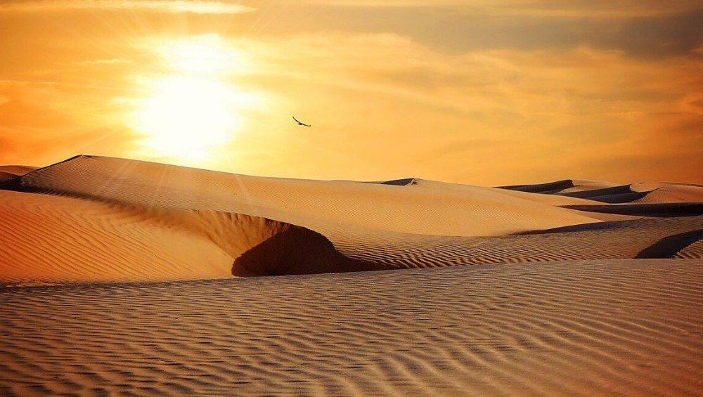 W Polsce jest największa pustynia w Europie! Wiedzieliście o tym?