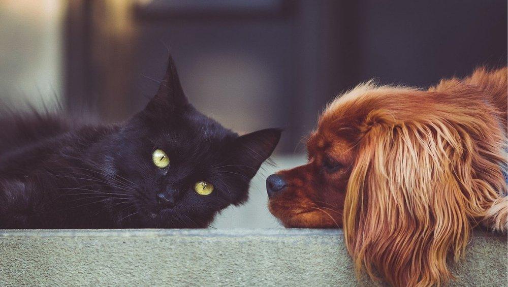 Emerytura dla zwierząt. Jakie są zasady i ile będzie wynosić?